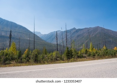 Rocky Mountains after Wild fire in Canada with many burnt trees in Canada near Banff