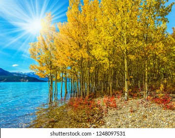 Rocky Mountains of Canada, autumn flood of artificial Abraham lake. Autumn sun warms the mountain valley. The golden foliage of aspen and birches. Concept of active and photo tourism