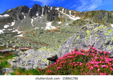 Rocky mountains covered with red flowers in summer