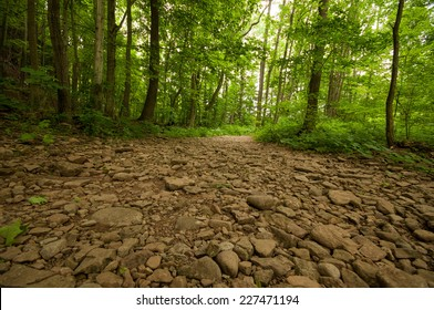 Rocky path leading into the forest/park green trees