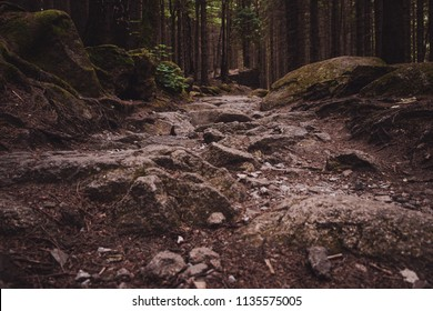 A rocky path in a moody conifer forest