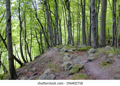 Rocky path in an old forest