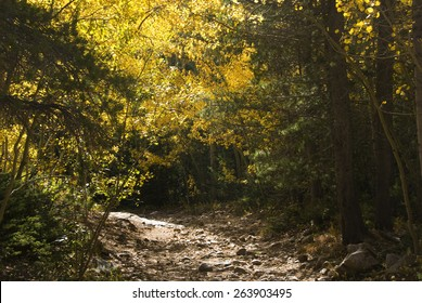 Rocky path through autumn yellow aspens and pines