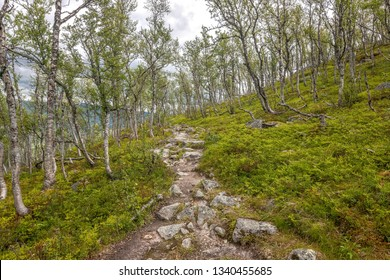 Rocky path through mountain birches, Norway