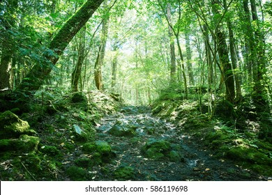 Rocky road in deep forest