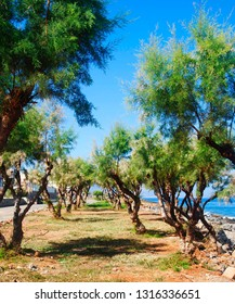 rocky and sandy coast of Sisi on Crete in Greece with trees growing next to it