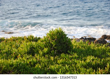 rocky and sandy coast of Sisi on Crete in Greece with plants growing next to it