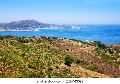 Rocky shore in marine reserve of Cerbere Banyuls, Mediterranean sea, Pyrenees Orientales, France