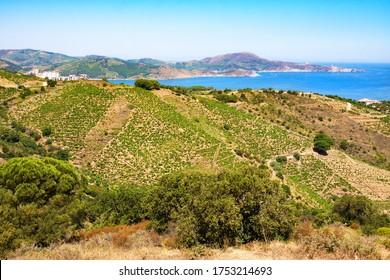 Rocky shore in marine reserve of Cerbere Banyuls, Mediterranean sea, Pyrenees Orientales, Cote Vermeille, France