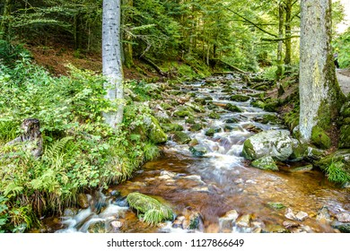 Rocky stream flowing through lush green woodland or forest in an alpine creek in a low angle view of the flowing water