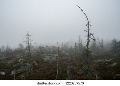 Rocky wasteland with dead trees in the fog.