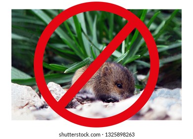 Rodent control, catching mice, mouse in the garden, rodents in the field, harm to the crop