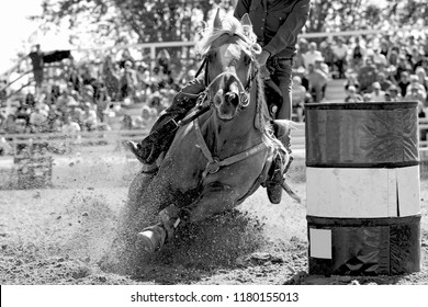 A rodeo barrel racing horse and contestant explode the arena sand as they gallop fast into a turn during a well-attended outdoor rodeo - focus point is on the horse's head.