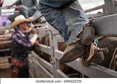 Rodeo bull riders waiting to ride