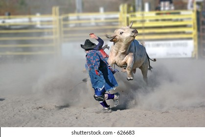 Rodeo clown being charged by bull