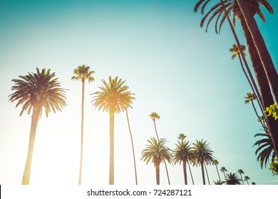 Rodeo Drive in Beverly Hills Palm Trees, bordering Hollywood California. Point of view photo of celebrity luxury lifestyle in the summer.