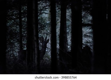 A roe buck moves through the trees under the cover of darkness.