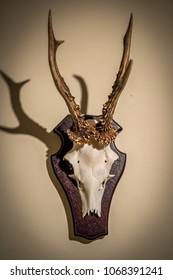 Roe buck trophy