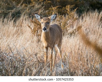 Roe deer in the spring , wild animal in the nature habitat