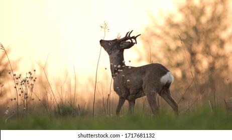 Roe deers in different situations