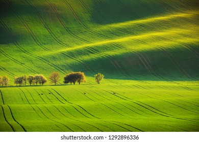 Roe deers and sunset lines and waves in the spring, South Moravia, Czech Republic