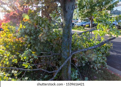 Rogers, Arkansas, USA, 10/21/2019, Aftermath of EF1 Tornado touched down during the night