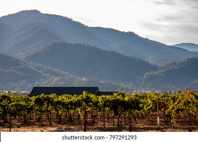 Rogue Valley, Oregon vineyard
