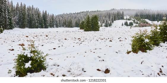 Roklansky stream area in winter season, National Park Sumava, south Bohemia, Czech republic