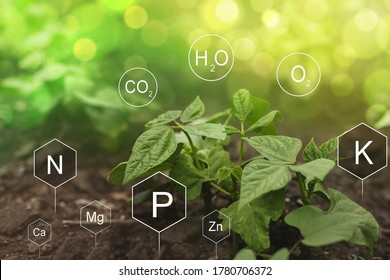 Role of nutrients in Bean plant life. Soil with digital mineral nutrients icon.