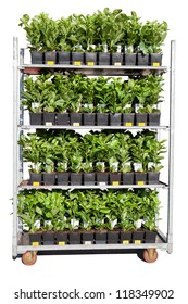 Roll container plants