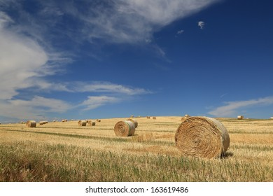 Rolled bales of hay in a country paddock in South Australia, Australia.