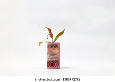 Rolled banknote money one hundred thousand Indonesia Rupiah and young plant grow up with white background. Concept of money growth or currency interest.