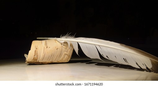 Rolled birch bark. On the scroll is a goose feather. Concept - Retro, Manuscript