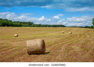 rolled hay bales out on a rural field next to a forest