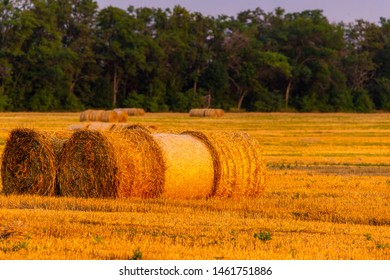 Rolled haystack on agriculture field landscape. Haystack farmland field panorama. Harvest in haystack agriculture farm