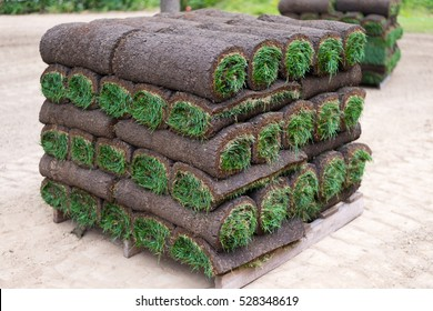 Rolled Sod Grass on a Pallet