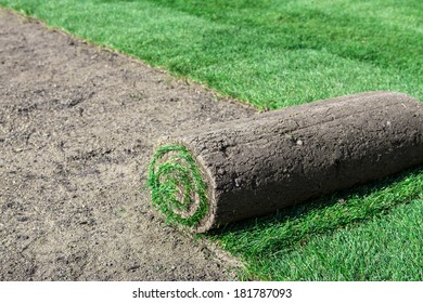 Rolled sod for new lawn