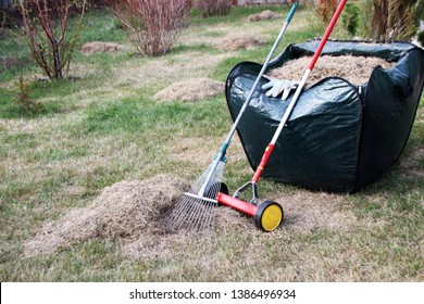 Roller moss removal rake, garden gloves and a lawn rake at a foldable garden leaf bag full of dethatched lawn grass in the spring garden