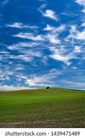 Rolling fields with blue sky and swirling clouds in Palouse region of eastern Washington