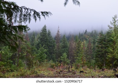 Rolling Fog In The Forest