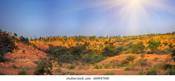 Rolling foothills of Deccan plateau covered with grasses, prosopis and acacia bushes, scrub jungle. Winter-spring transition