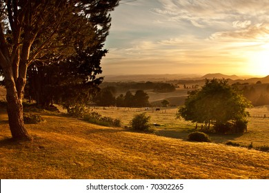 Rolling golden pasture and trees at sunrise