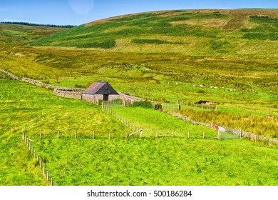 Rolling green farm fields under a calm blue sky. Colorful panorama over the meadows of sheep farmland of Scotish valley in Scotland, United Kingdom. Farm estate in the background.