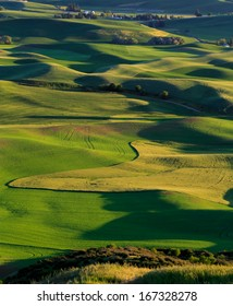 Rolling Green and Yellow HIlls of Grain and Wheat of the Palouse Country Washington