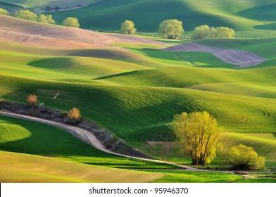The rolling hills farmland in Palouse Washington