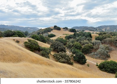 """Rolling hills and fields of dry grass with Coastal Live Oak trees in the foothills of central California, the """"Golden State"""".  Five years of drought have led to hazardous fire conditions and risk."""