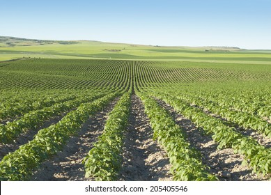 Rolling hills of fields of potatoes and grain in the Idaho High Country.