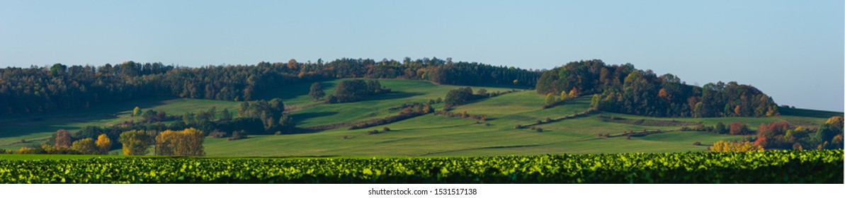 rolling hills with hedgerows and trees in morning light