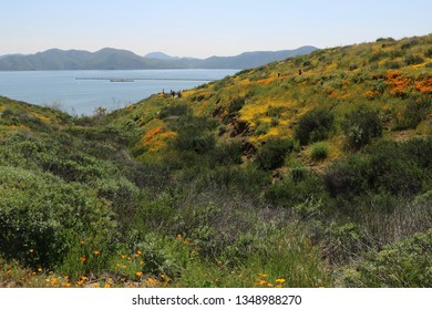 Rolling hills near a lake are covered in California poppies