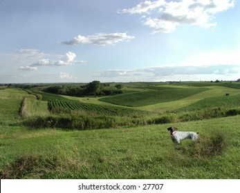 Rolling hills of northeast Iowa